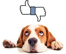 Jetzt Thomann Facebook Fan werden!